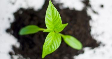 Ecosia: Die grüne Websuche (Video)