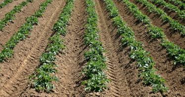 Bio-Gemüse für umme