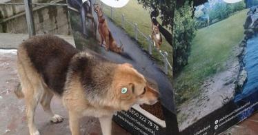 Dieser Leergutautomat wirft Futter für streunende Hunde aus (Video)