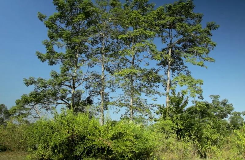 Der Herr der Bäume - ein einzelner Mann pflanzt seit 30 Jahren täglich Bäume und erschuf so einen Urwald