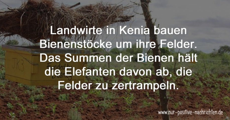 Kenia: Bienen helfen gegen zertrampelte Felder | Quelle: https://www.facebook.com/ElephantsandBees