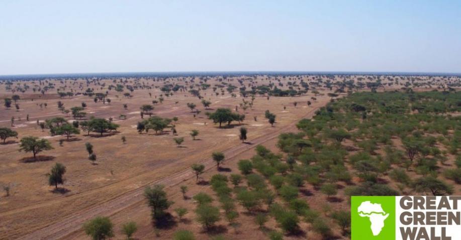 Great Green Wall: Wiederaufforstung in der Sahelzone (Video)